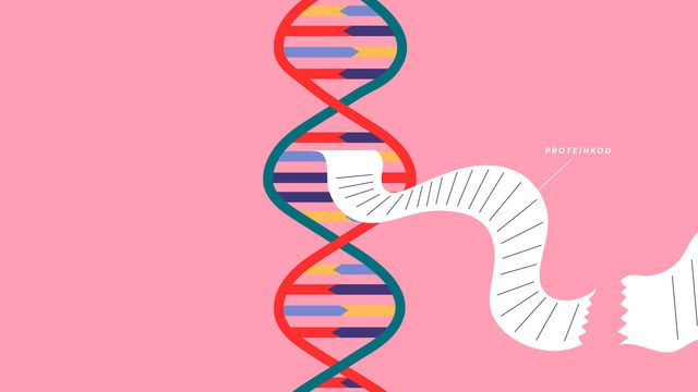 Snabbkoll! : Proteinsyntesen
