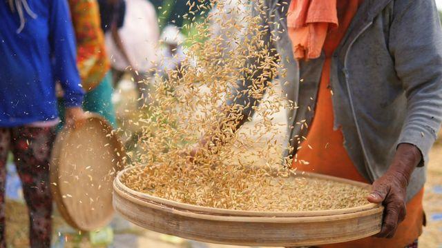Briljanta forskare : Gyllene riset