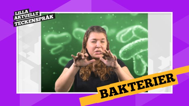 Vi förklarar! : Bakterier